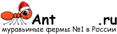 Муравьиные фермы AntFarms.ru - Санкт-Петербург